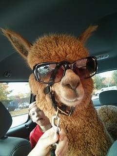 King James taking a car ride