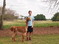 shorn alpaca